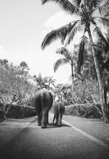 Postcard Elephant Walk