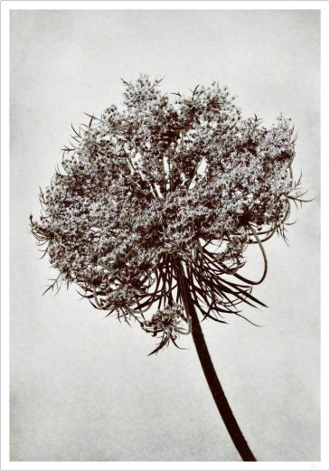 Rebel Flower Tree  poster 30x40 cm